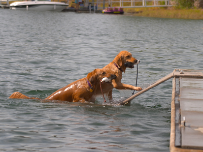 The original doggie dock.
